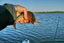 Наша рыбалка на Браславских озёрах